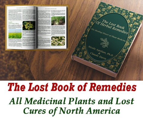 the lost book of remedies review - what is included in the program?